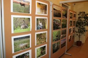 Aktualna wystawa zdjęć
